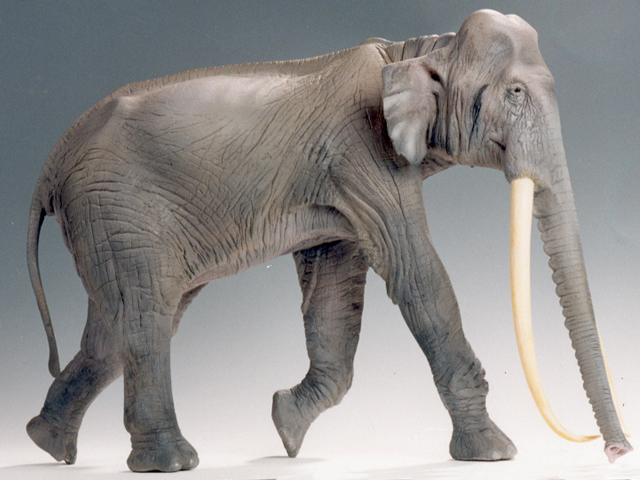 File:Paleoloxodon antiquus.jpg
