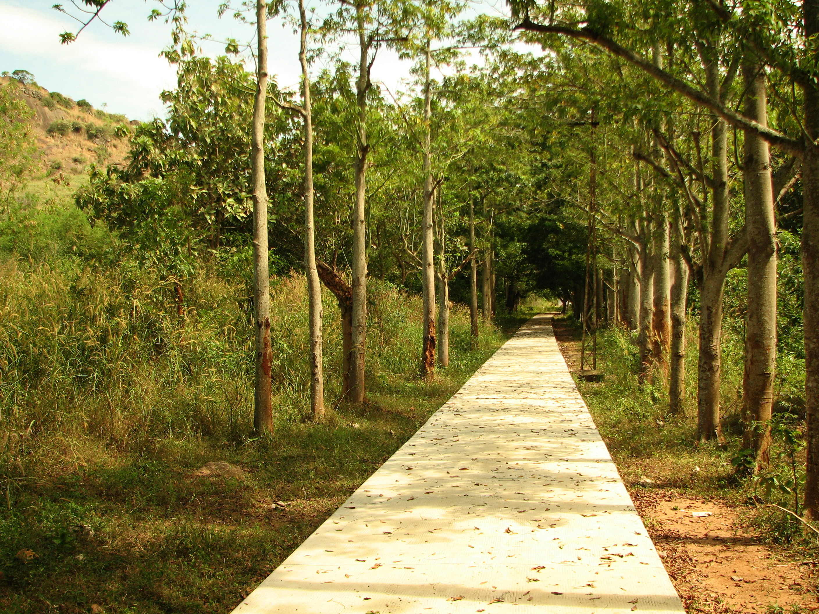 File pathway at udayagiri park jpg wikimedia commons Pathway images