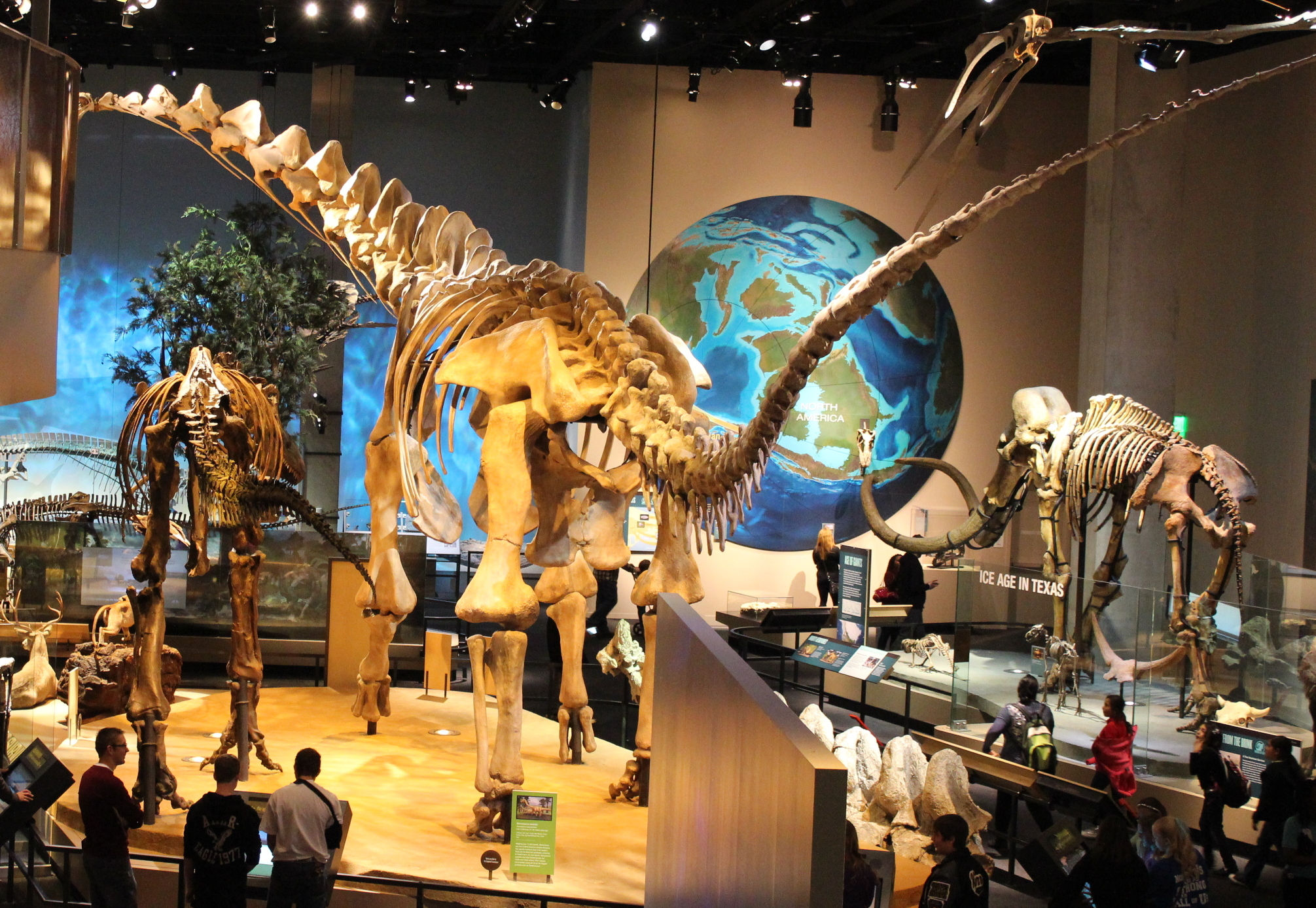 FilePerot Museum Alamosaurusjpg FilePerot Museum Alamosaurusjpg