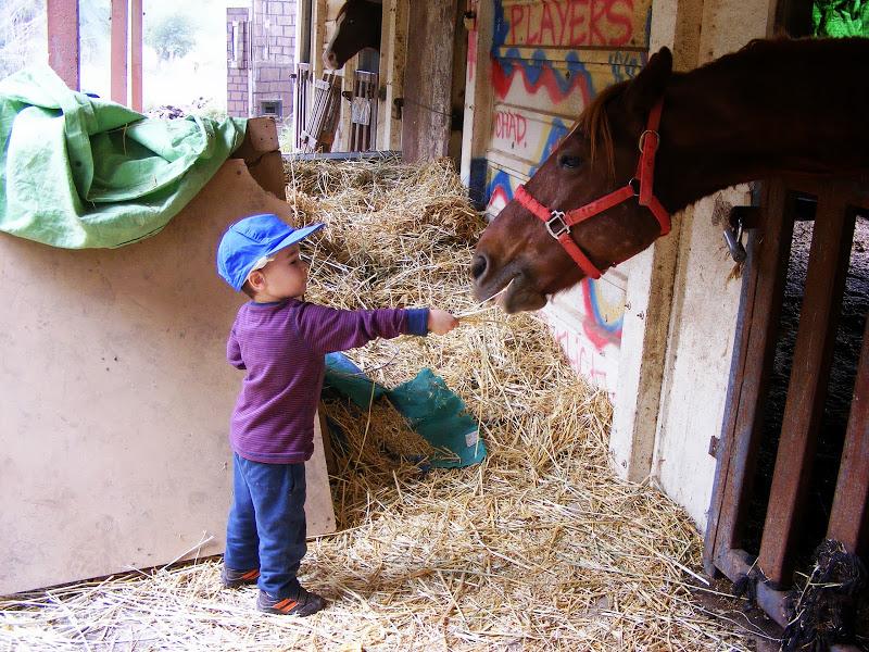 ילד  וסוס