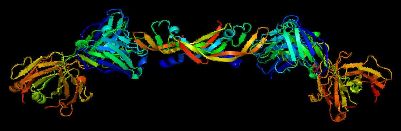 WikiZero - Факторы роста эндотелия сосудов
