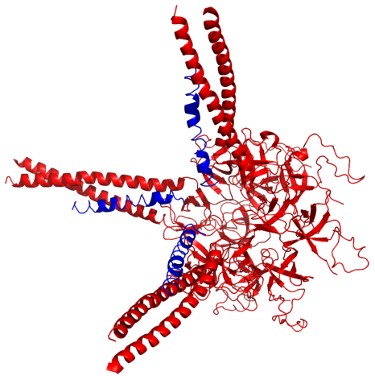 Pup-prokaryotic ubiquitin-like protein.png