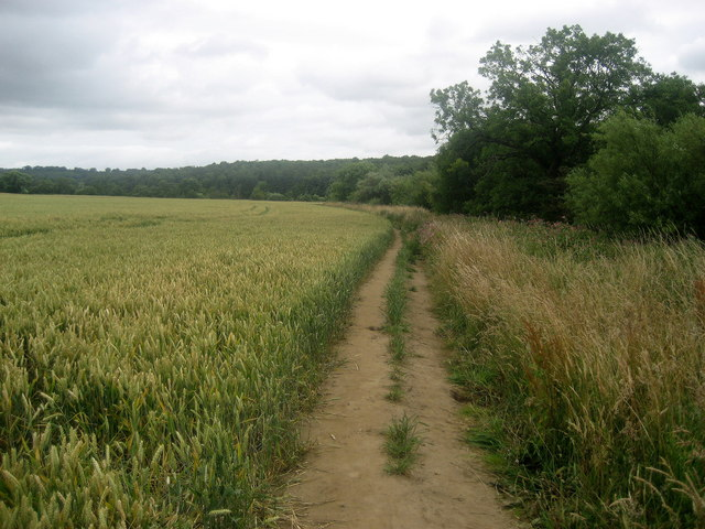 Ripon Rowel Walk beside the River Ure - geograph.org.uk - 1418884