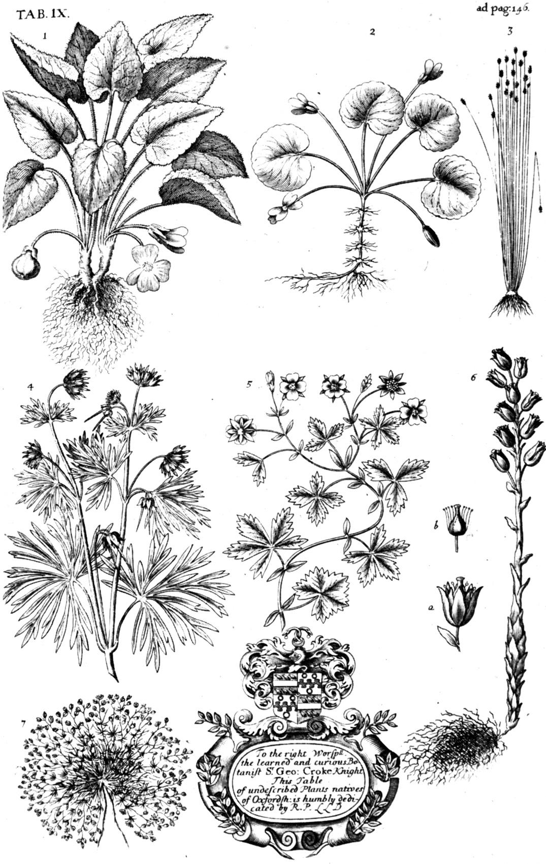 natural history micheal runtz pdf