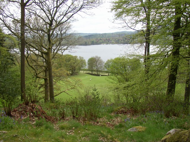 View from Stagshaw Garden over pasture to Windermere, Ambleside - geograph.org.uk - 166363.jpg