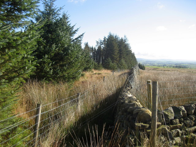 Wall enclosing Part of Gisburn Forest - geograph.org.uk - 595642