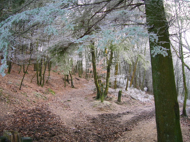 Wintry Woodland - geograph.org.uk - 1100719
