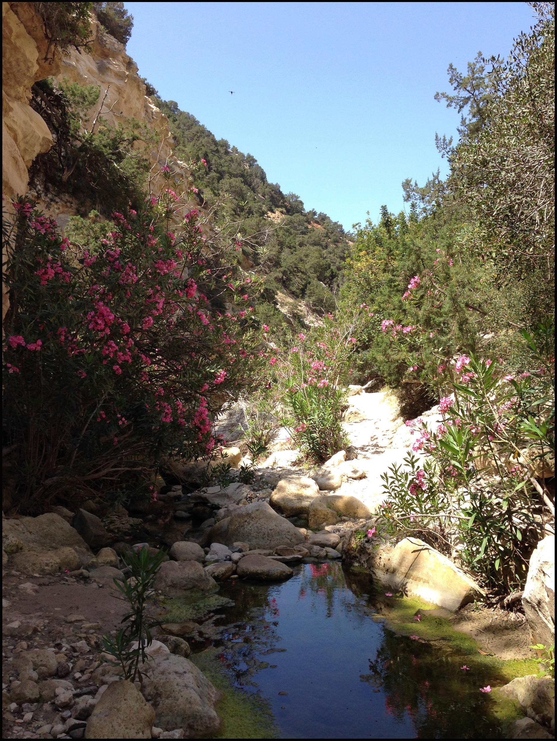 File:Кипр, ущелье Авакас - panoramio (5).jpg - Wikimedia ...