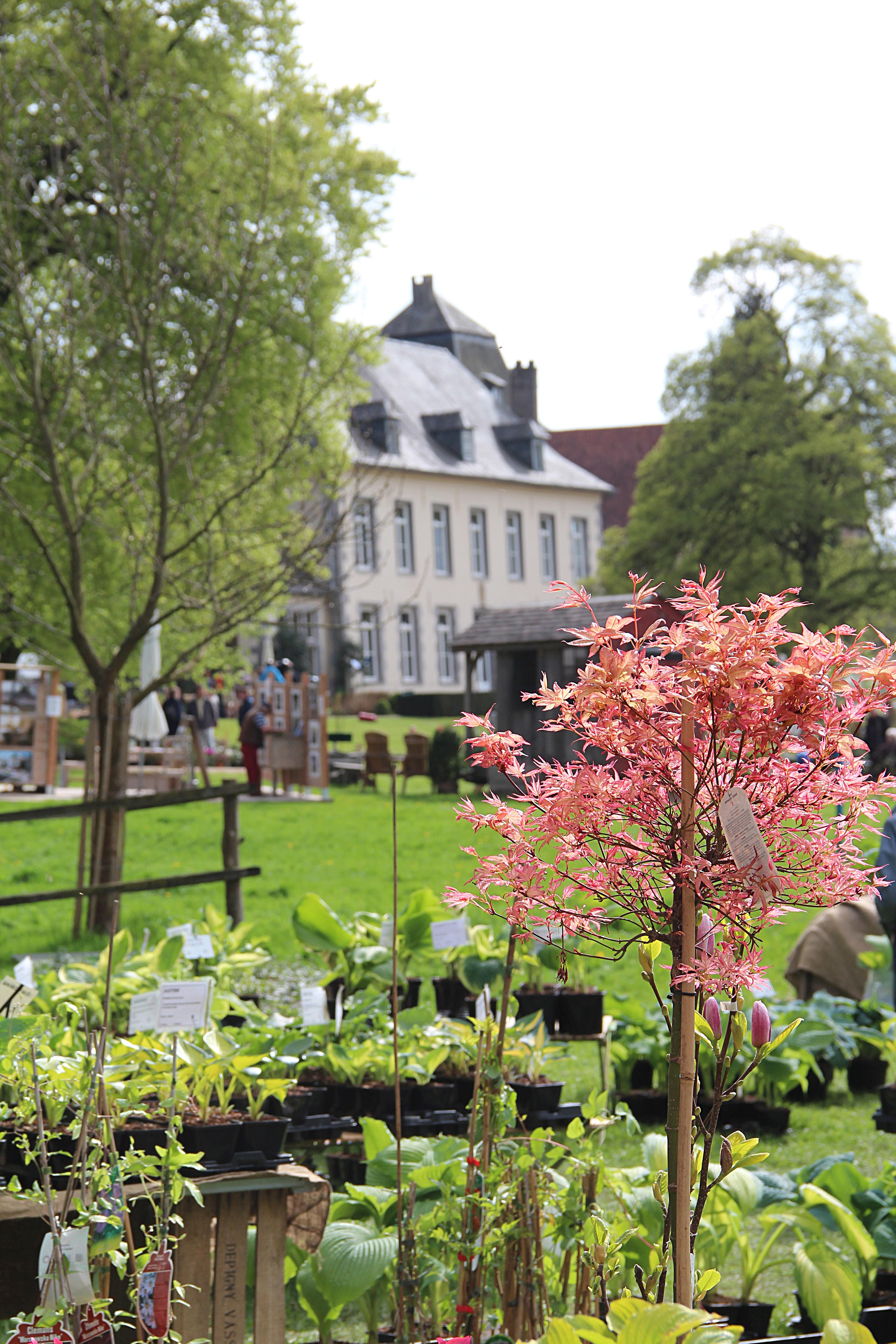 File 0 couture saint germain jardins de l 39 abbaye d for Jardin d aywiers 2016