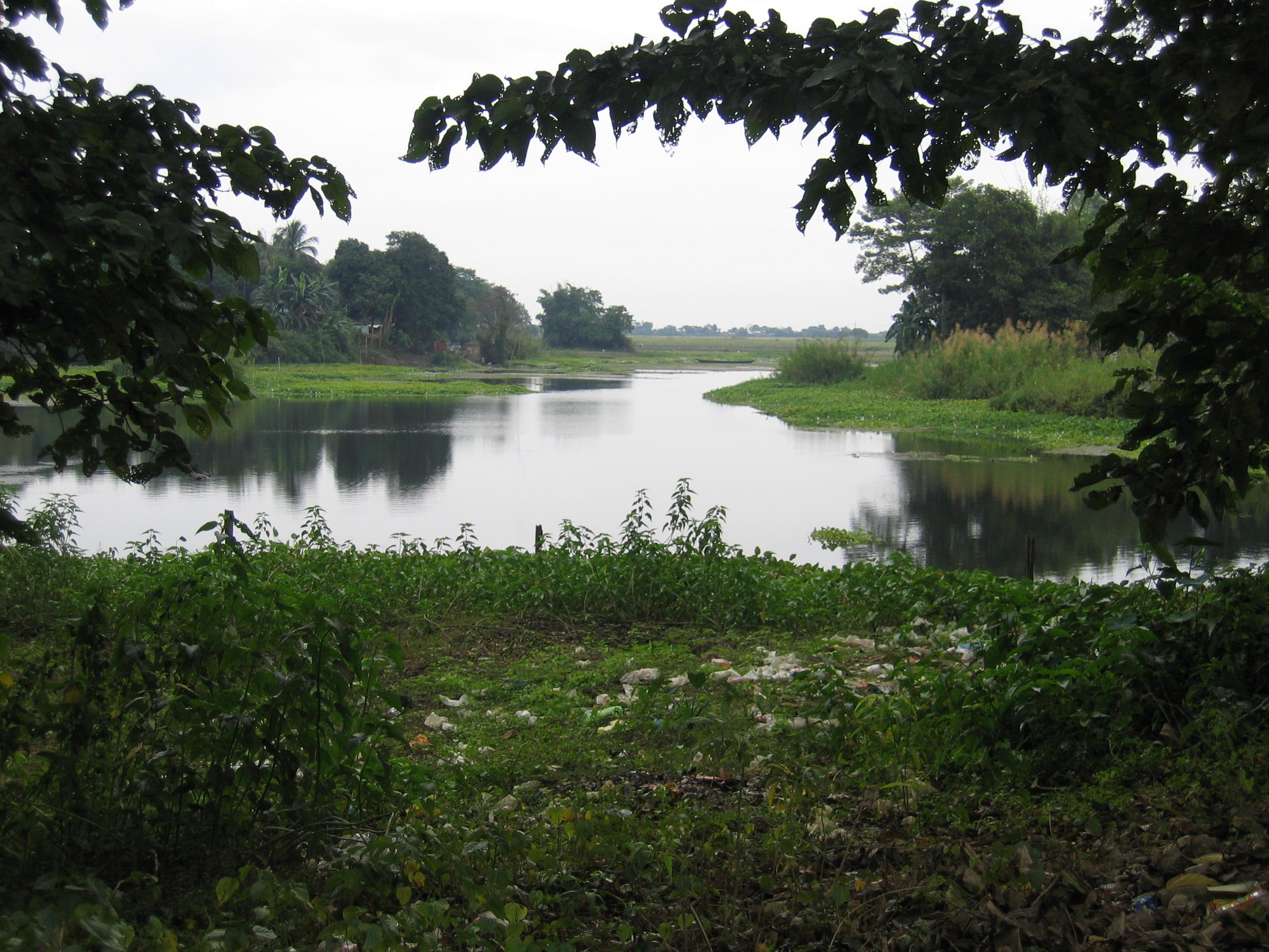Majuli wetland