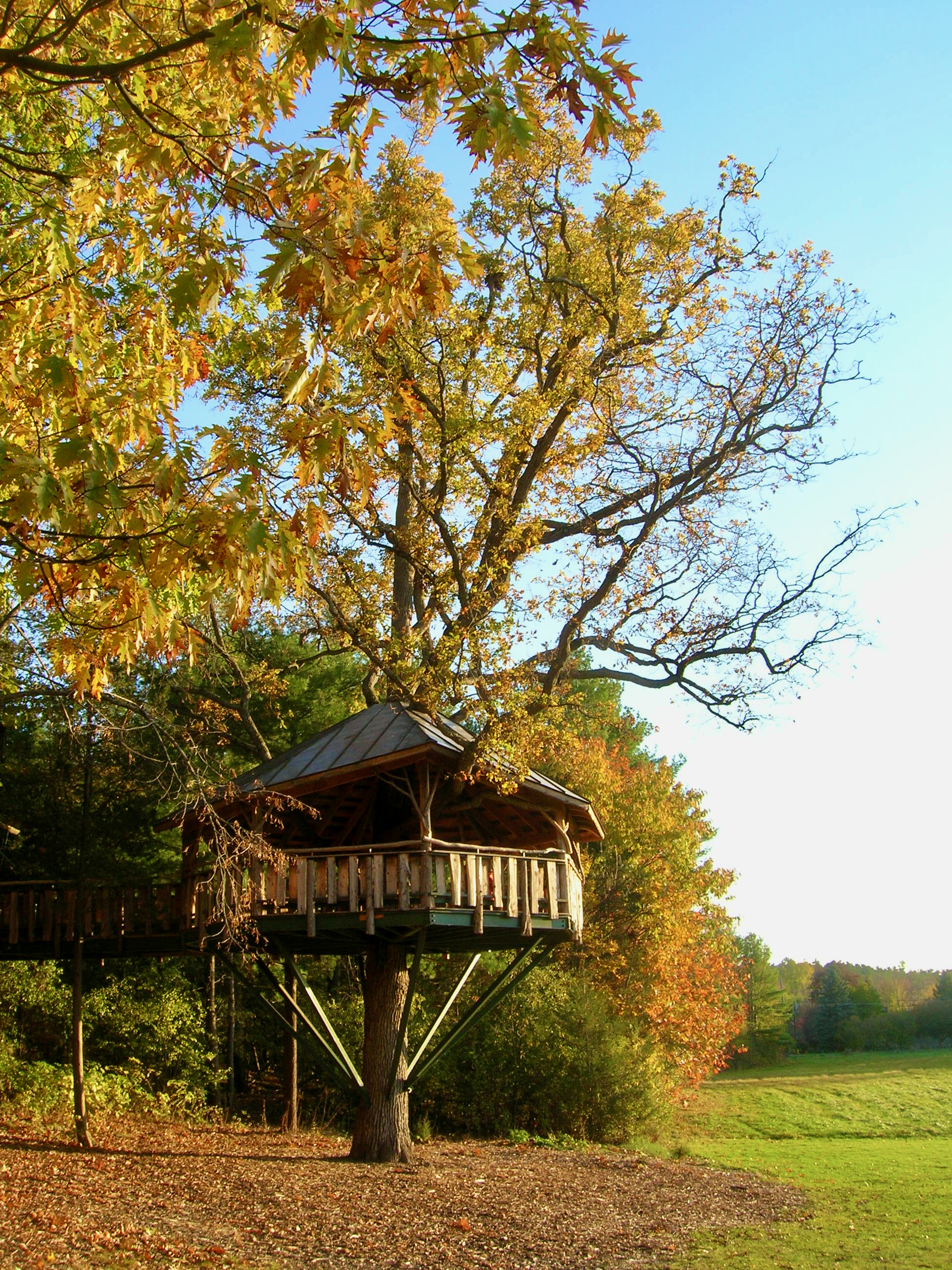 Picture of: Tree House Wikiwand