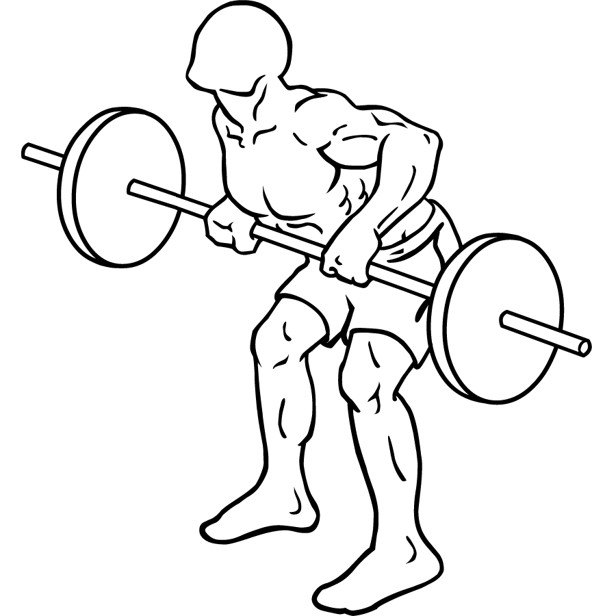 File:Barbell-rear-delt-row-2.png - Wikimedia Commons