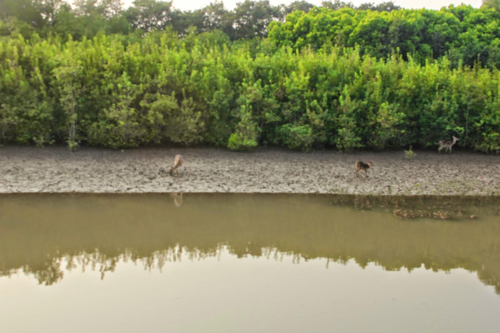 भीतरकनिका राष्ट्रीय उद्यान