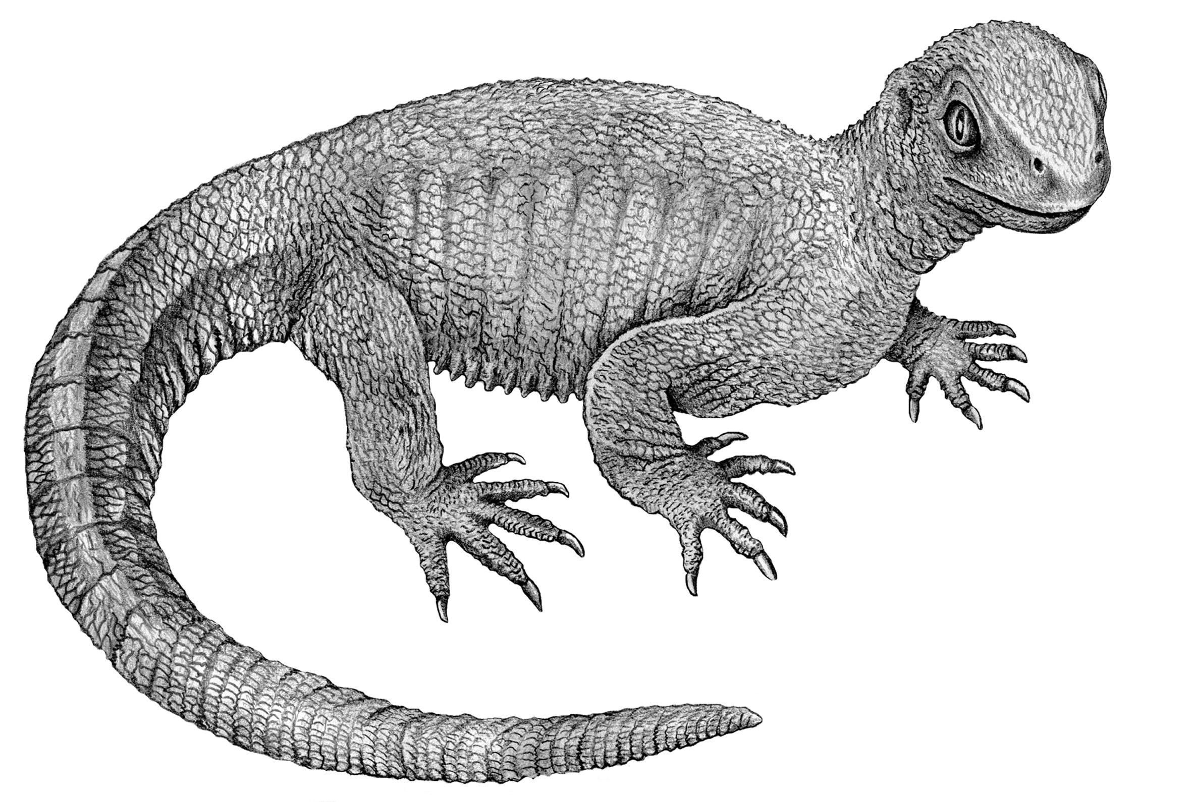 Schildkröten – Wikipedia
