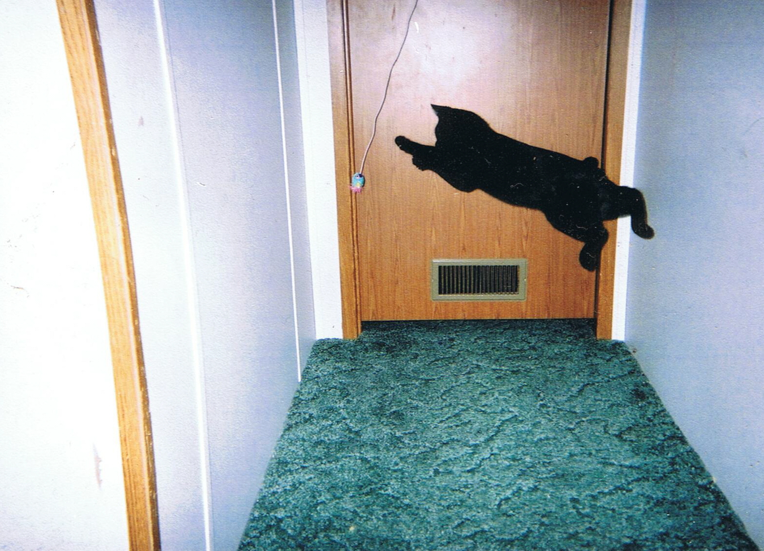 flying cat demeanor
