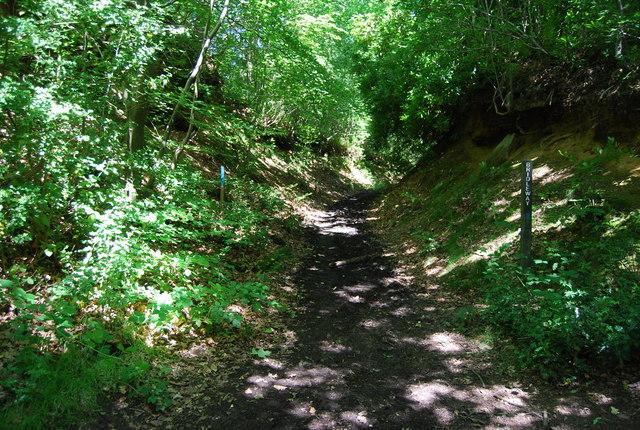Bridleway, Oldbury Woods - geograph.org.uk - 856787