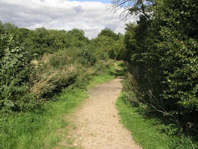 Edlington Wood - geograph.org.uk - 238915