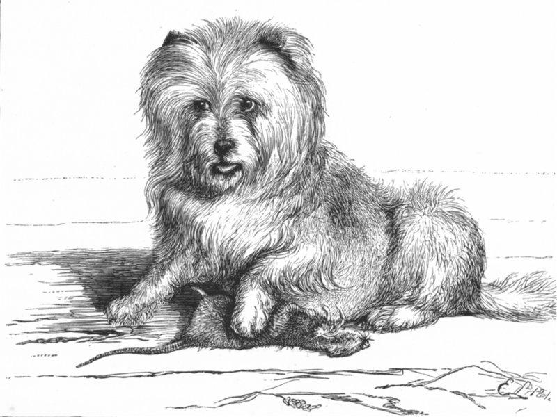 File:Emma.landseer.vixen.1881.jpg