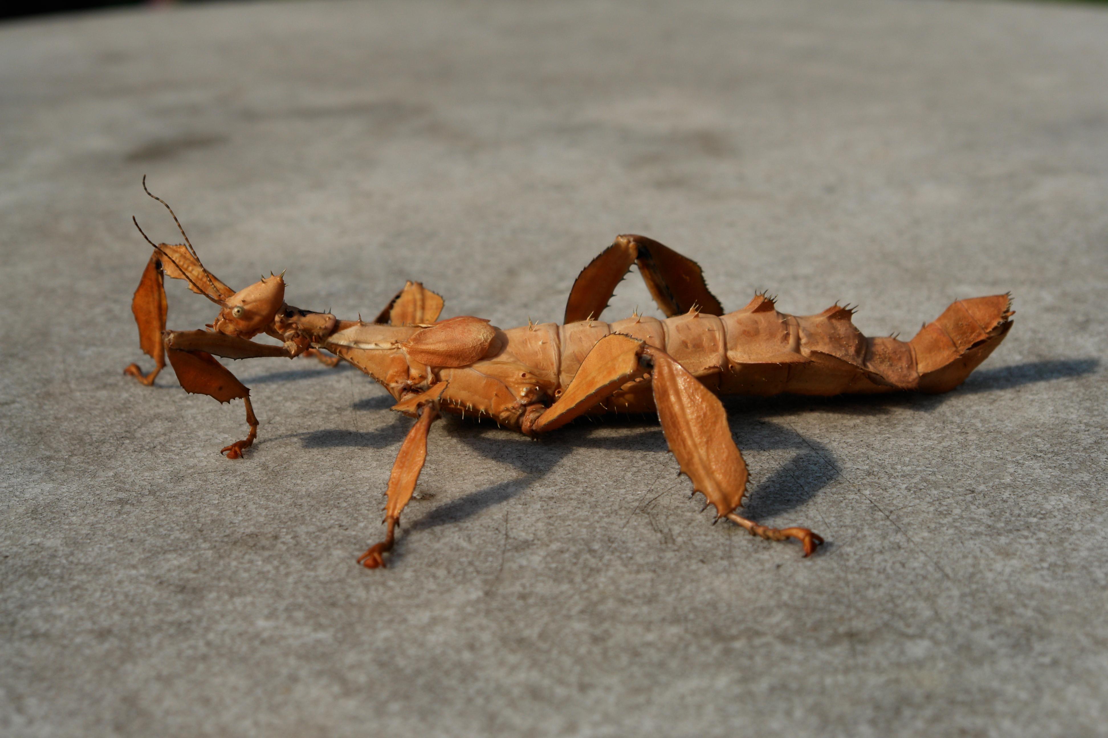 10 Imágenes de extraños insectos que parecen sacados de una película de extraterrestres