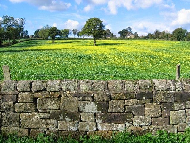Farmland opposite Ogston Reservoir - geograph.org.uk - 266488