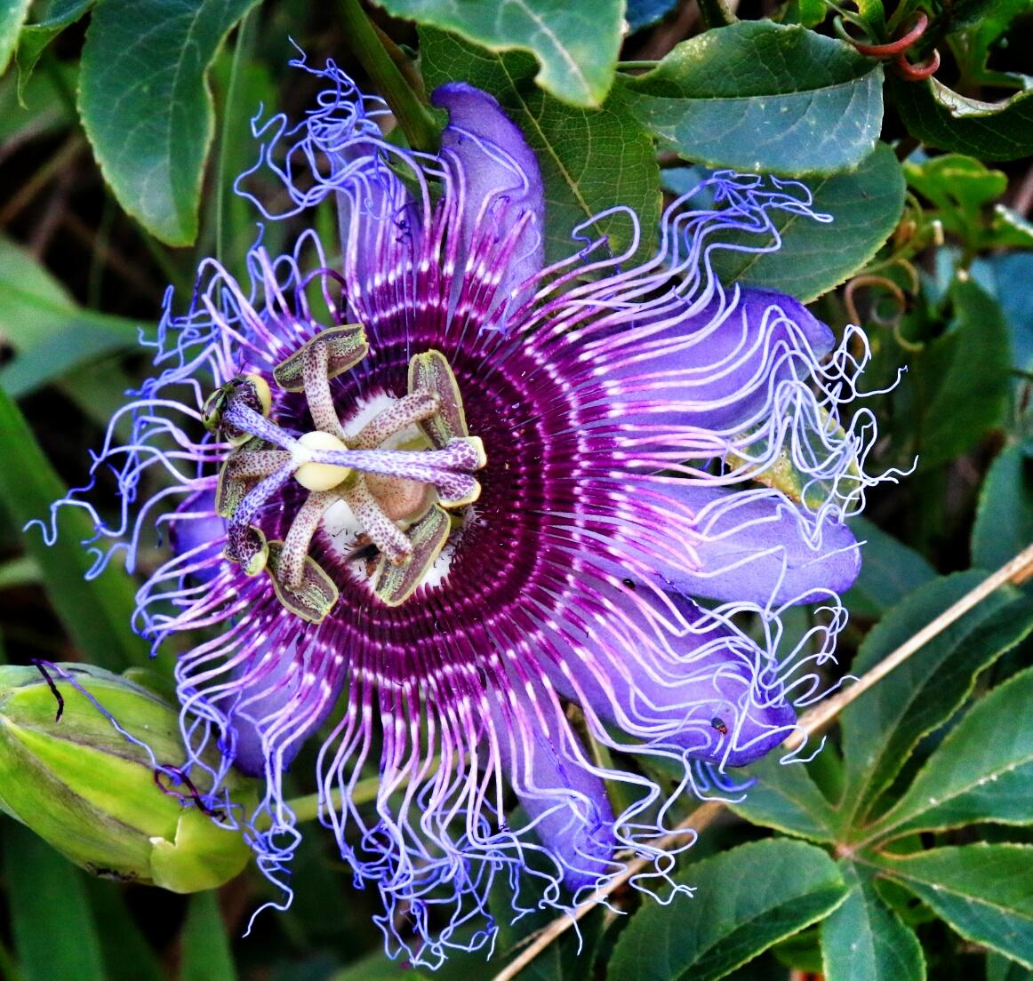 Resultado de imagen de imágenes de flor diamantina