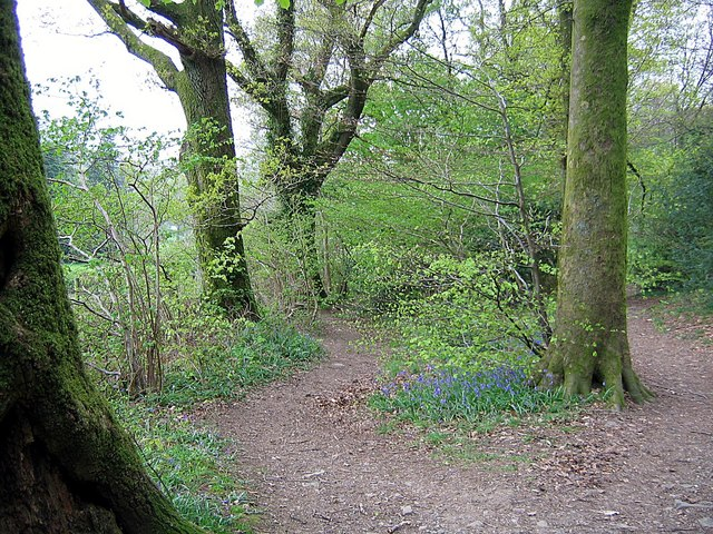 Footpath, Castlehead Woods - geograph.org.uk - 1275928