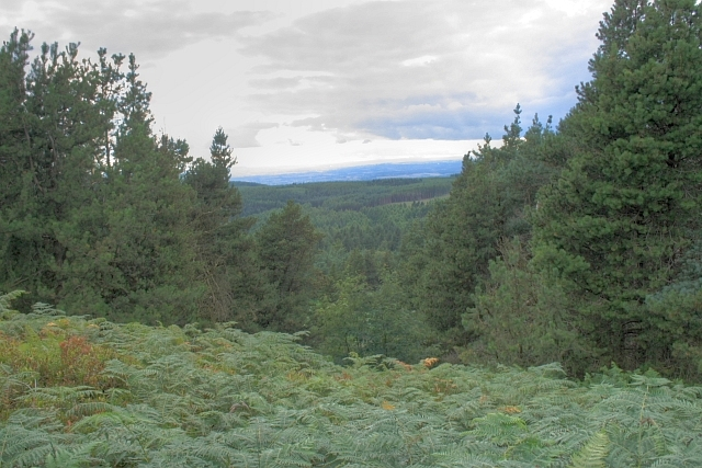 Forest Ride, Silton Woods - geograph.org.uk - 909841