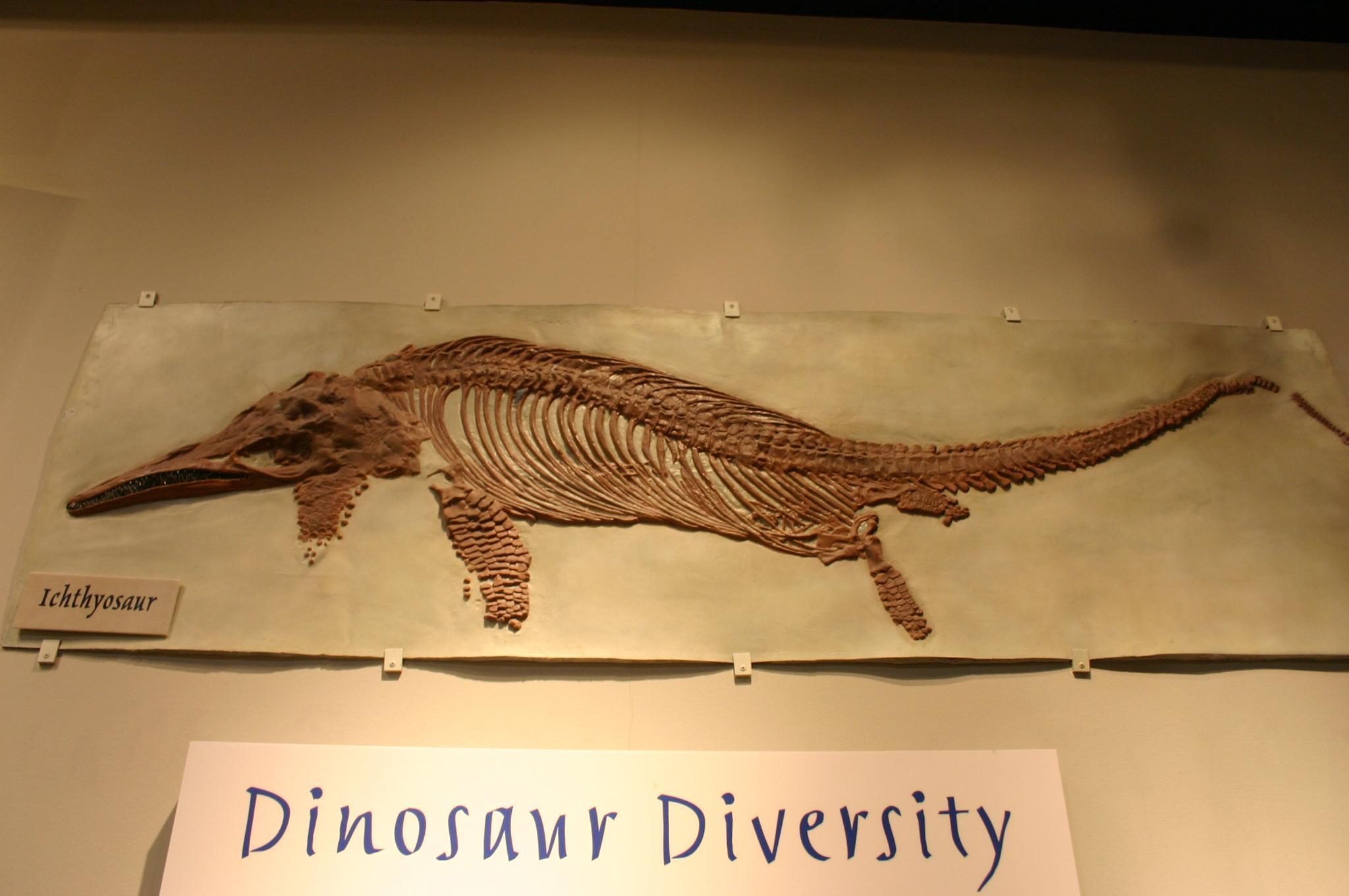 ichthyosaur fossil - photo #1