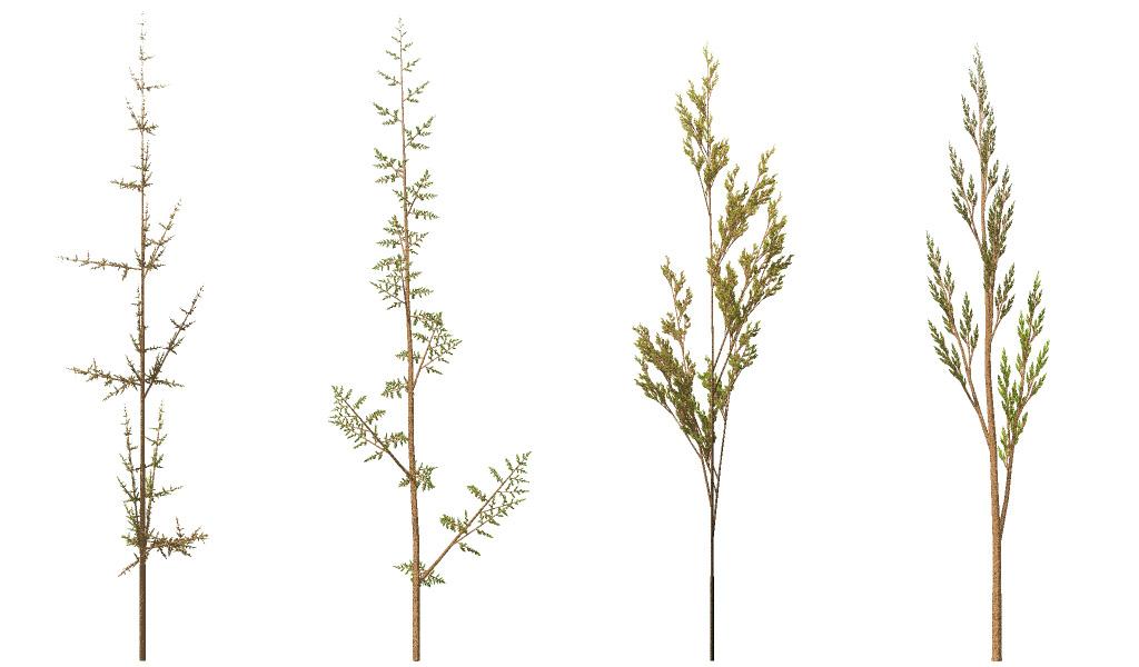 Fractal weeds.jpg