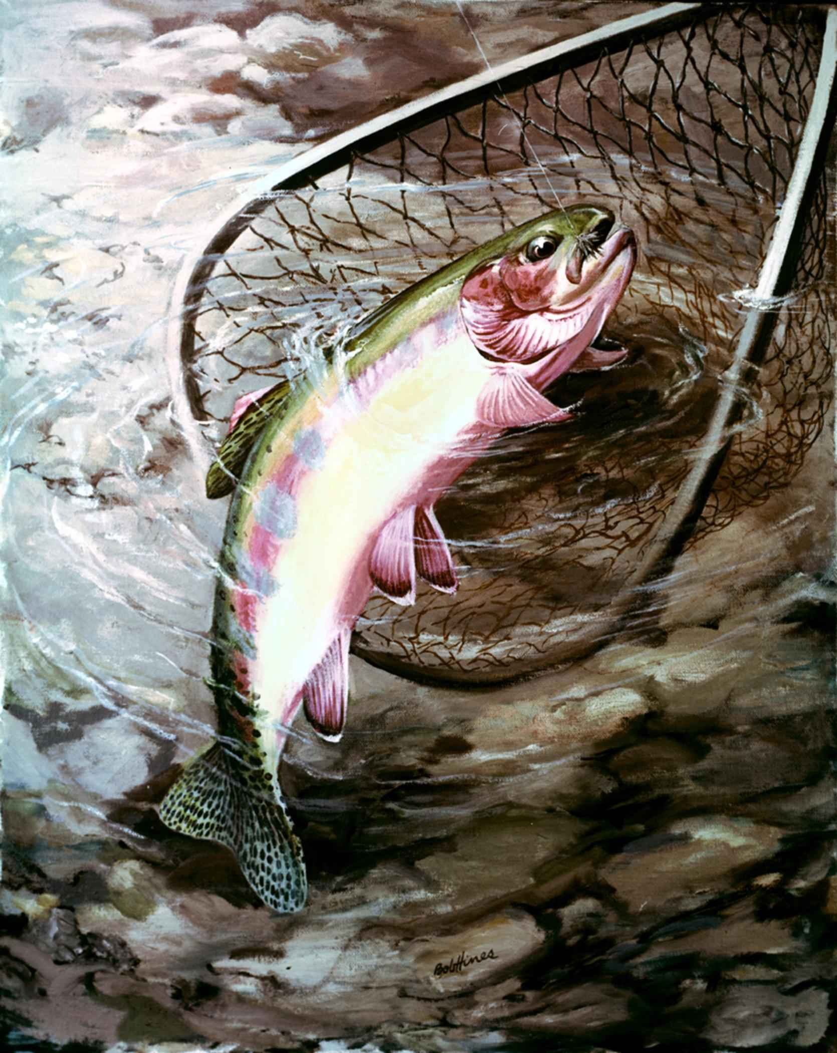 Golden trout