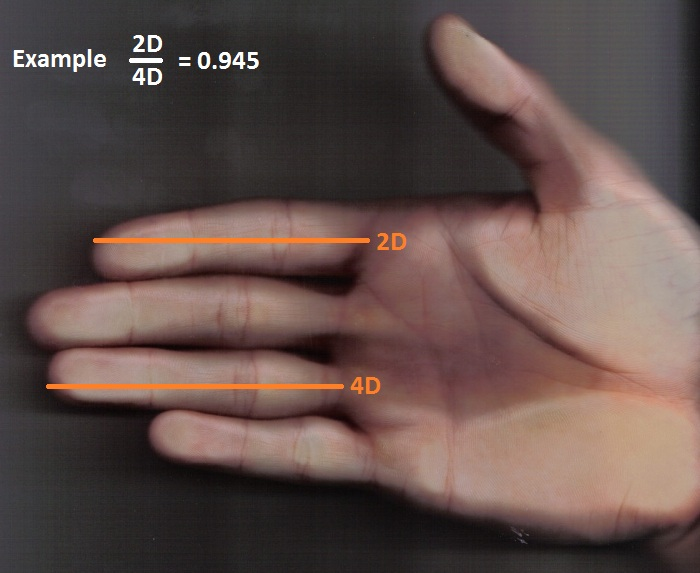 Digit ratio sex differences cognitive abilities