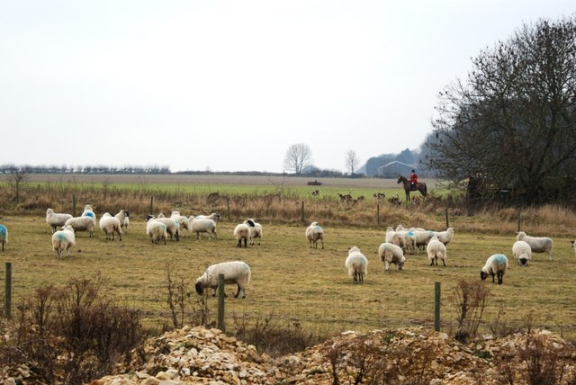 File:Huntsman, hounds and sheep, Honington Heath - geograph.org.uk - 1131789.jpg