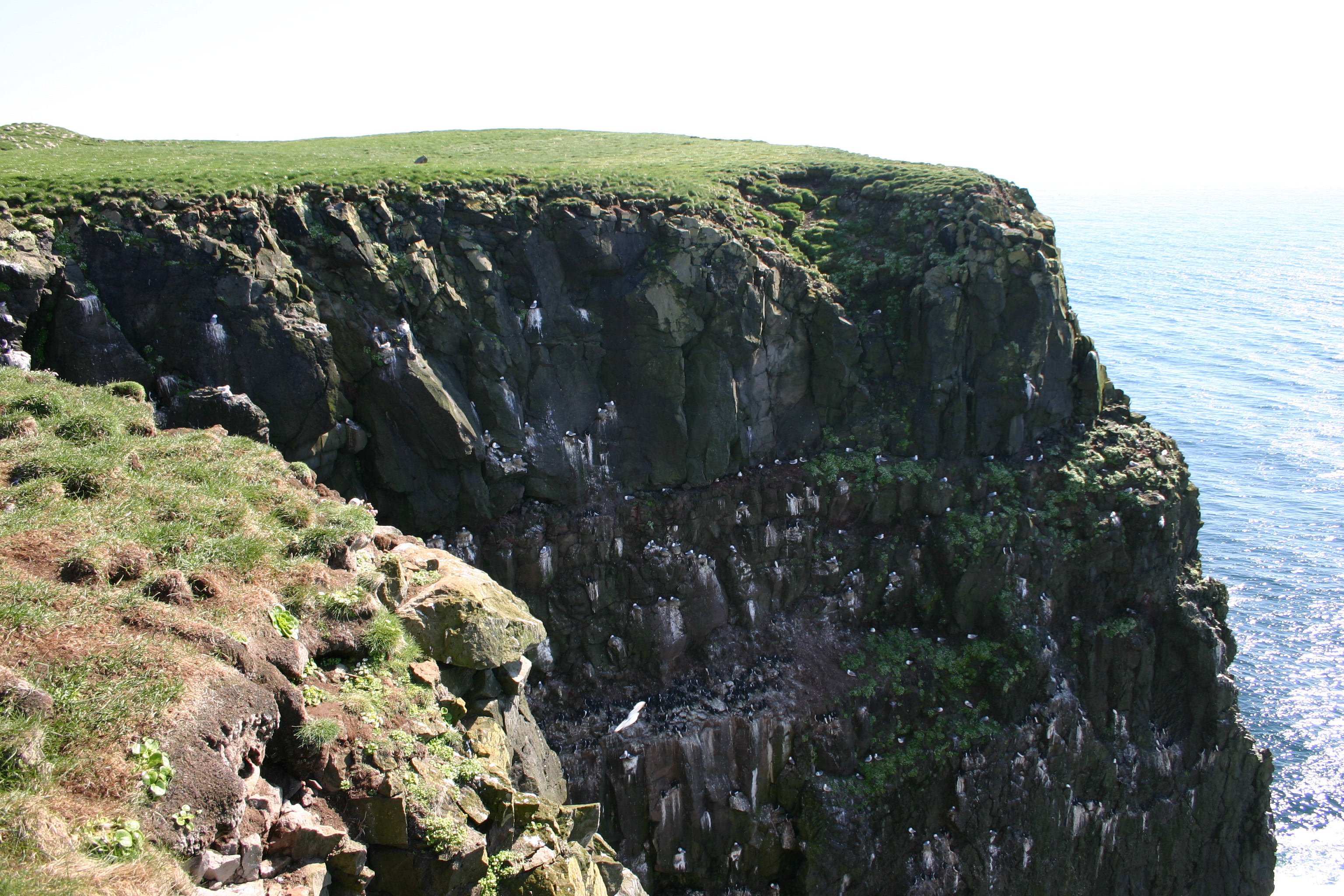 Látrabjarg Bird Cliffs Iceland Latrabjarg.bird.cliff.jpg