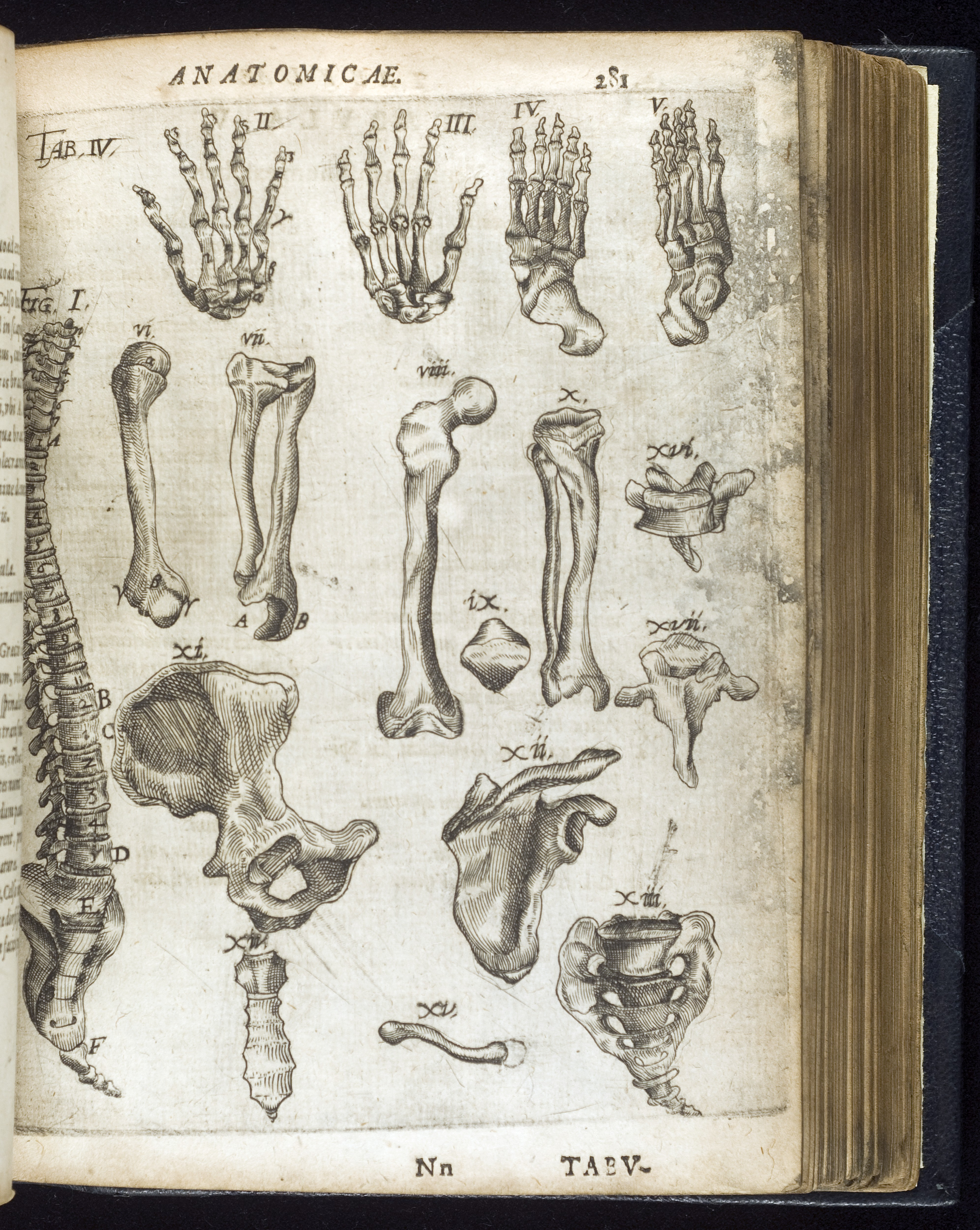 Fileillustration Of Bones Of The Hand Wellcome L0050261g