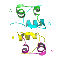 猪胰岛素三维结构,图中显示的是胰岛素同源二聚体的晶体结构