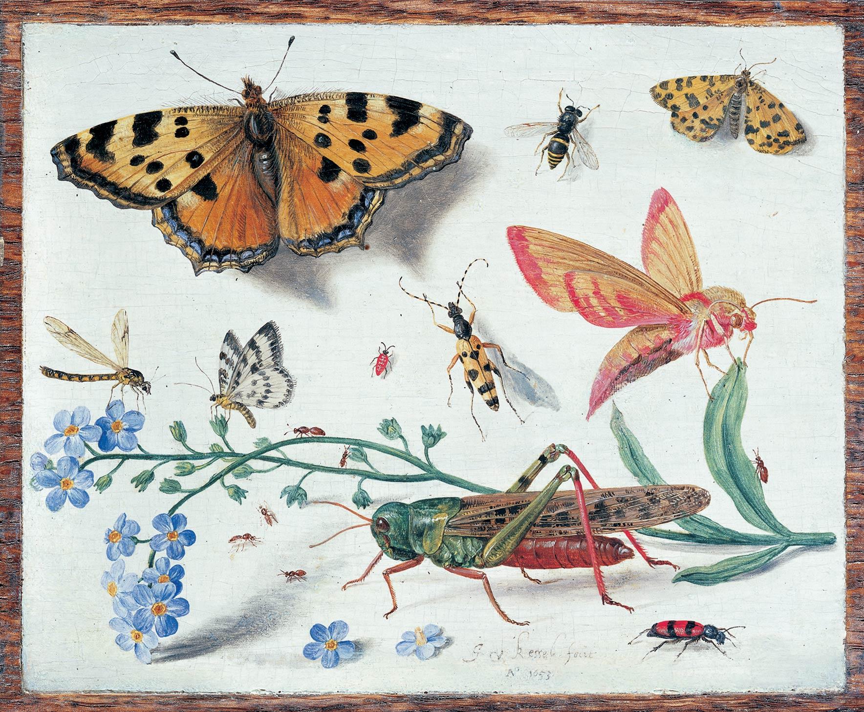 File:Jan van Kessel 001.jpg - Wikimedia Commons