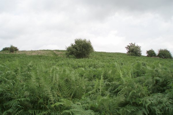 Knowle Hill - geograph.org.uk - 212778