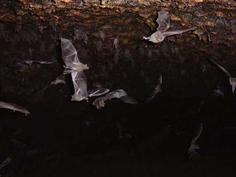 אדם הולך הביתה - בין משל המערה ומערת העטלפים