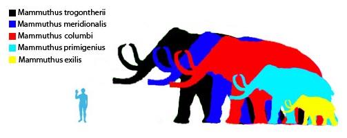 Mammuthus.jpg by Fun-Dan, Wikimedia