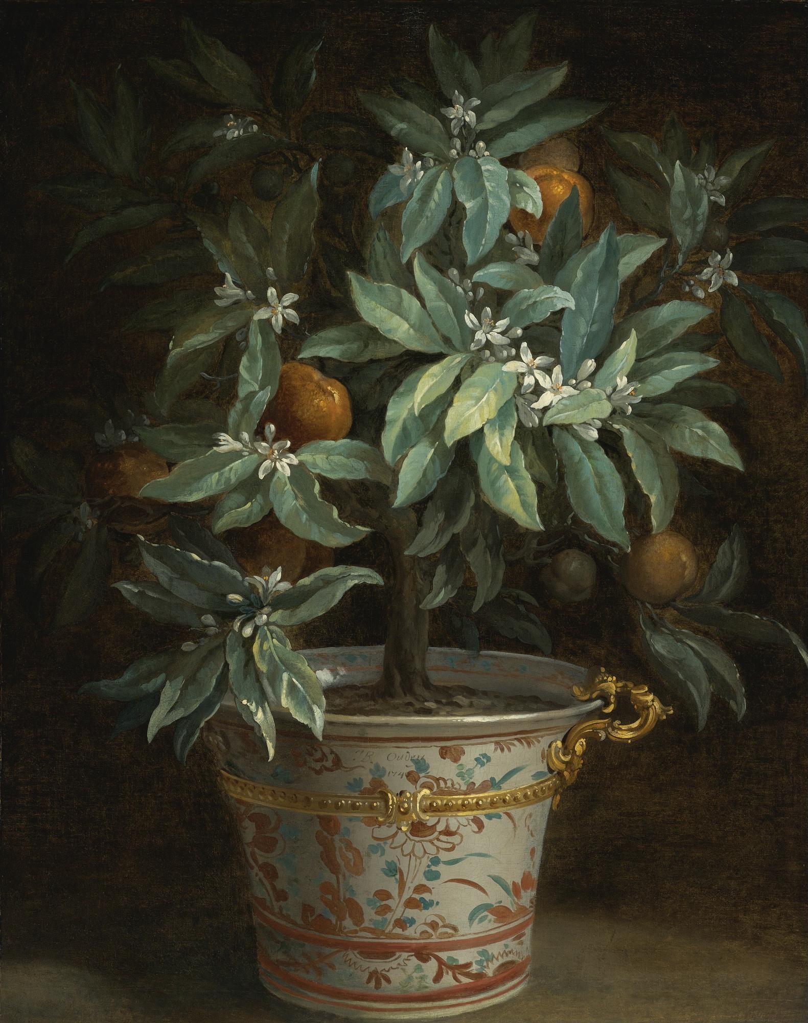 L'Oranger, par Jean-Baptiste Oudry, 1740