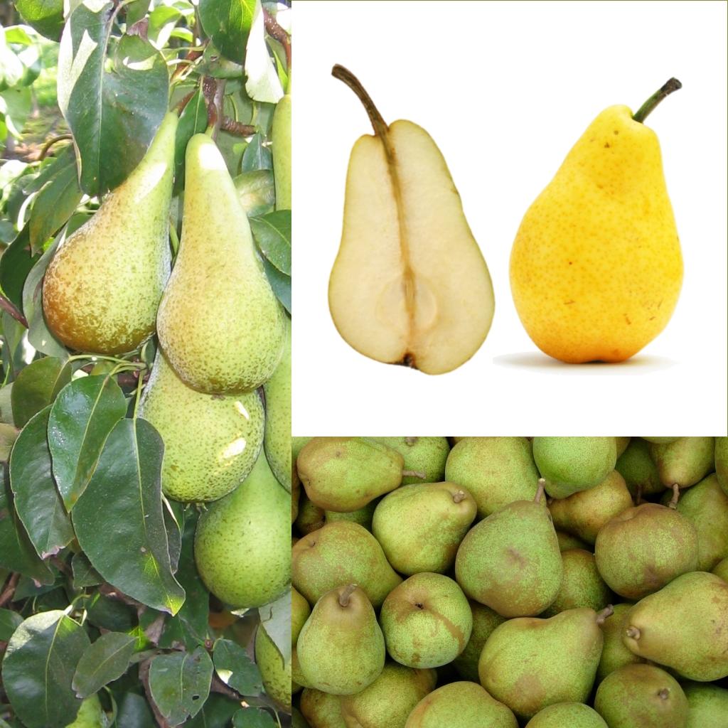 beneficios de la pera verde