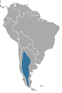 Patagonian Weasel area.png