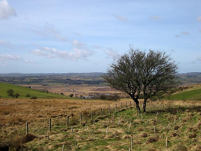 Plantation above Cors Caron - geograph.org.uk - 1214259