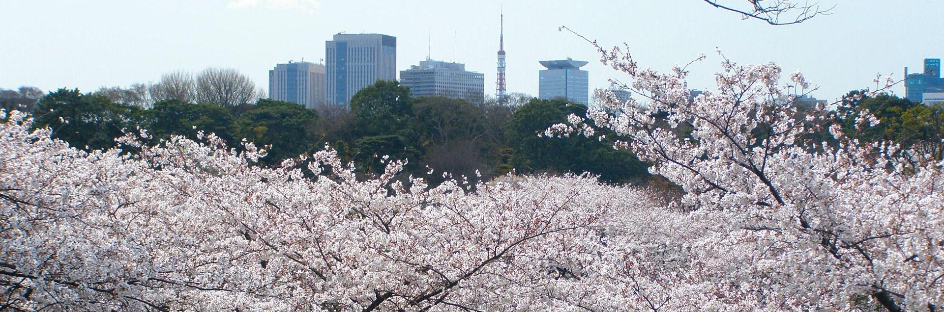 Tokio, en.wikipedia.org