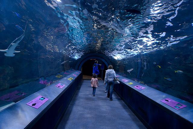 Gallon Aquarum Poseidon Aquarium Daytona Beach