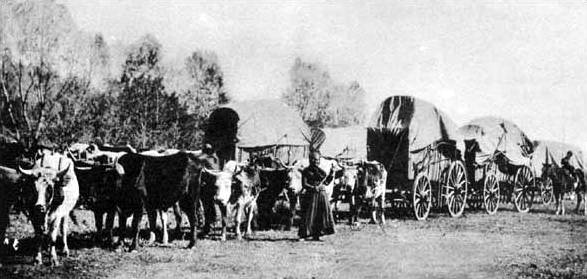 Photograph of a wagon train.  Mid-19th Century