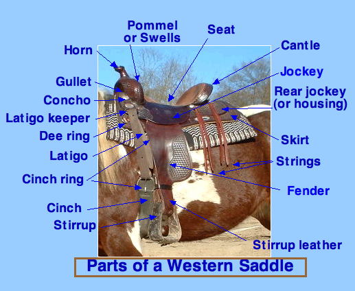 Diagram of a Western saddle
