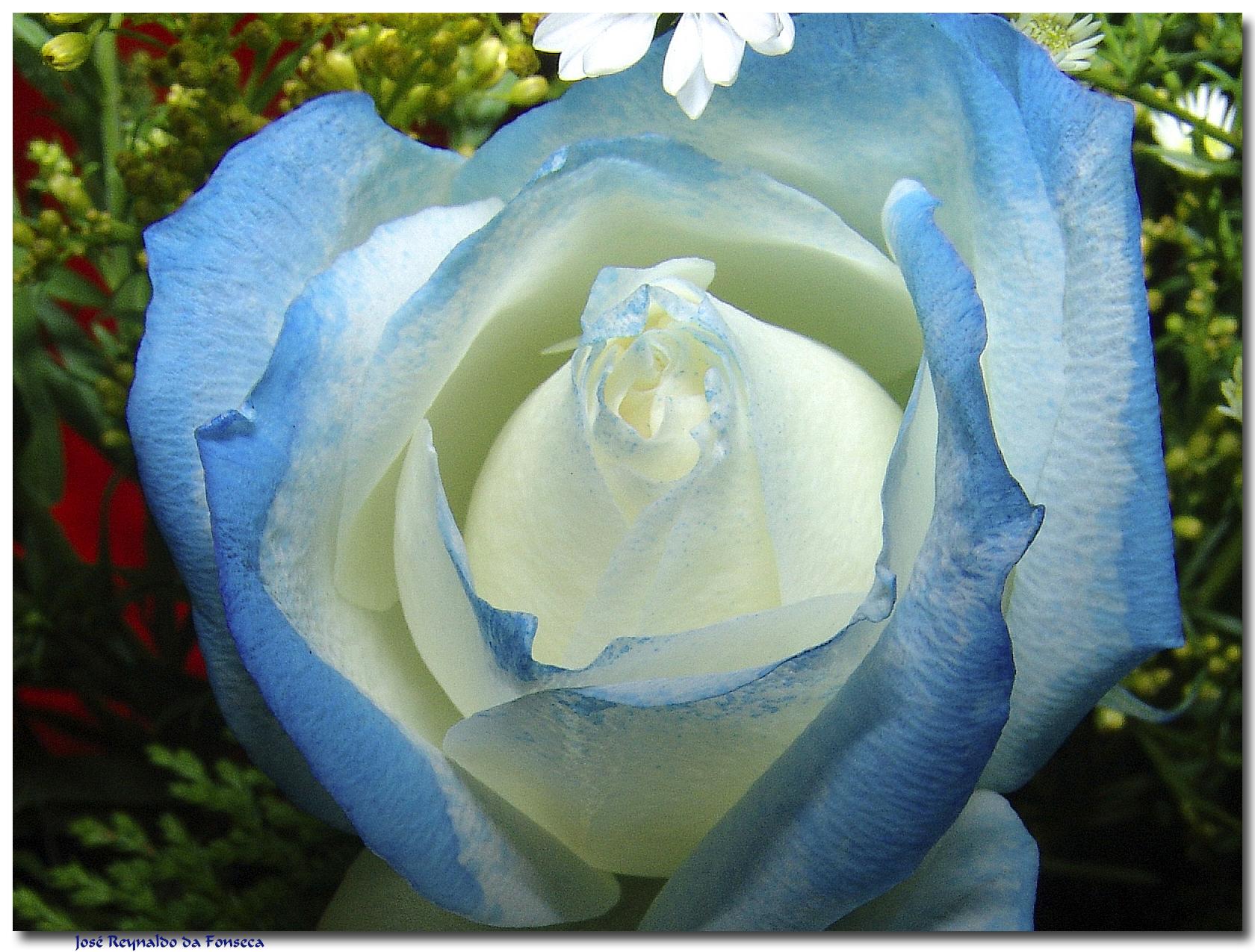 O teu beijo azul (HAEREMAI)