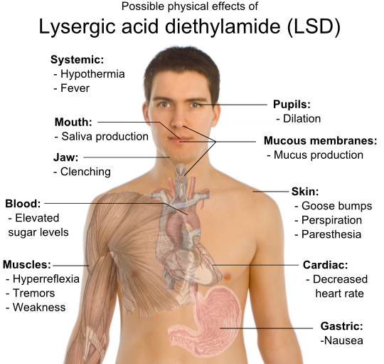 http://upload.wikimedia.org/wikipedia/commons/archive/a/af/20090424043539!Possible_physical_effects_of_lysergic_acid_diethylamide_(LSD).png