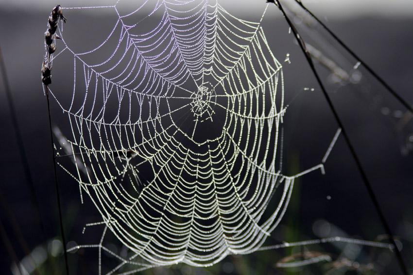 Spinnennetz im Gegenlicht - Quelle: WikiCommons, URL am Ende des Beitrags